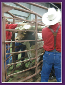 Dickinson Cattle Co