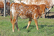 Lots of Time - Tool Time x Lots Of Flair - 2015 Heifer - b_8039
