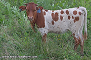 Jam Bang - Jam Packed x Cowboy Tuff Chex - 2018 Embryo Heifer - e_5518