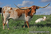 Texas Longhorn Dam - Drag Dance - Photo Number: e_8872.jpg