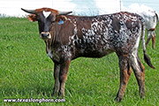 Glad Galore - Glad Hander x Flair Galore - 2018 Heifer - f_3096