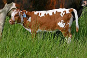 Mile Quest - Quester x Mile Marker - 2006 Heifer - s_1621_calf